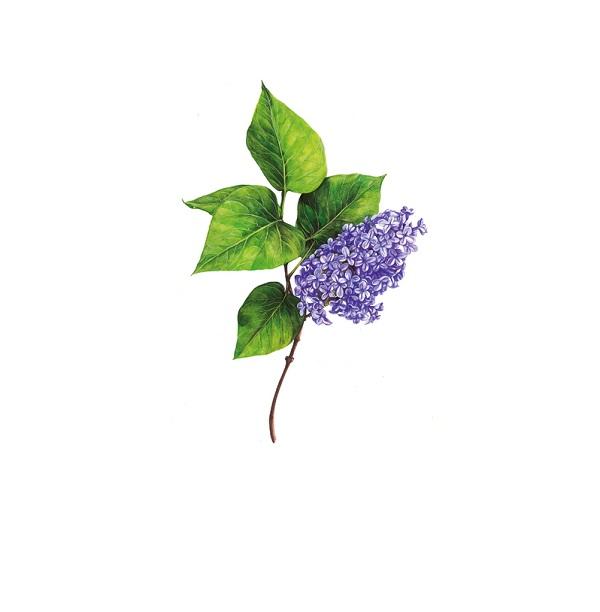 Flowers Tips